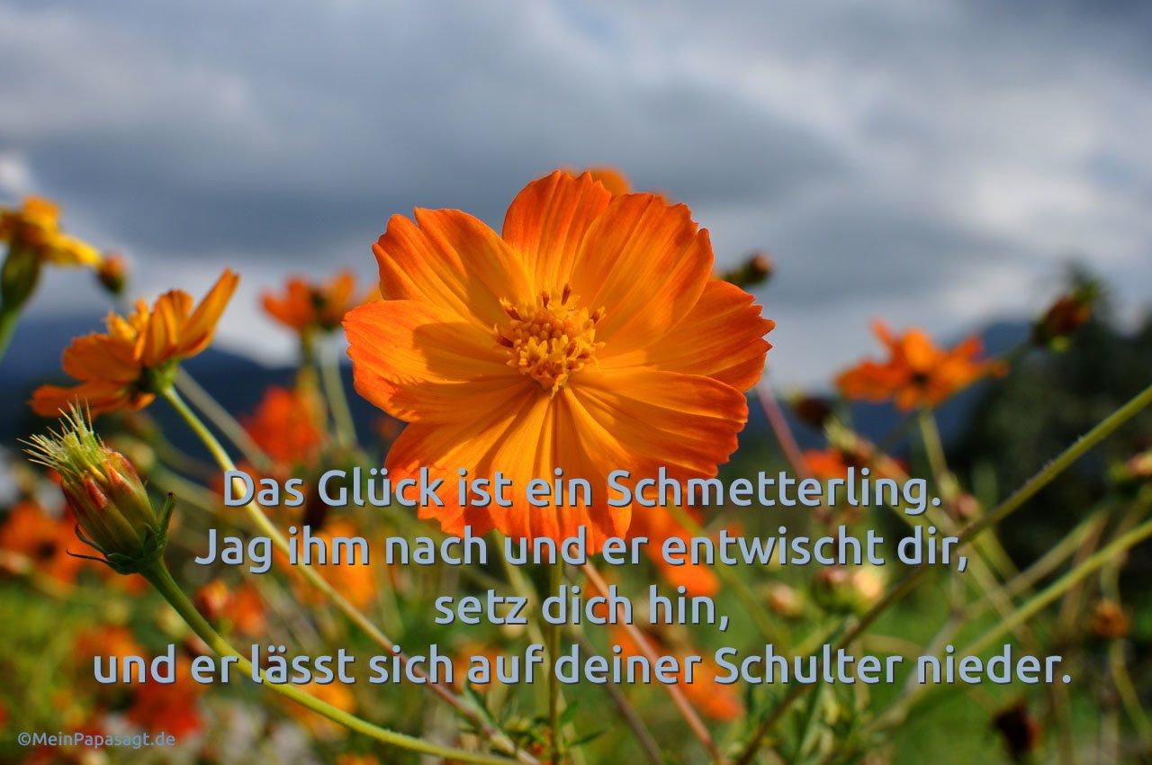 Blumenbett vor Wolkenhimmel mit dem de Mello Zitat: Das Glück ist ein Schmetterling. Jag ihm nach und er entwischt dir, setz dich hin, und er lässt sich auf deiner Schulter nieder. Anthony de Mello