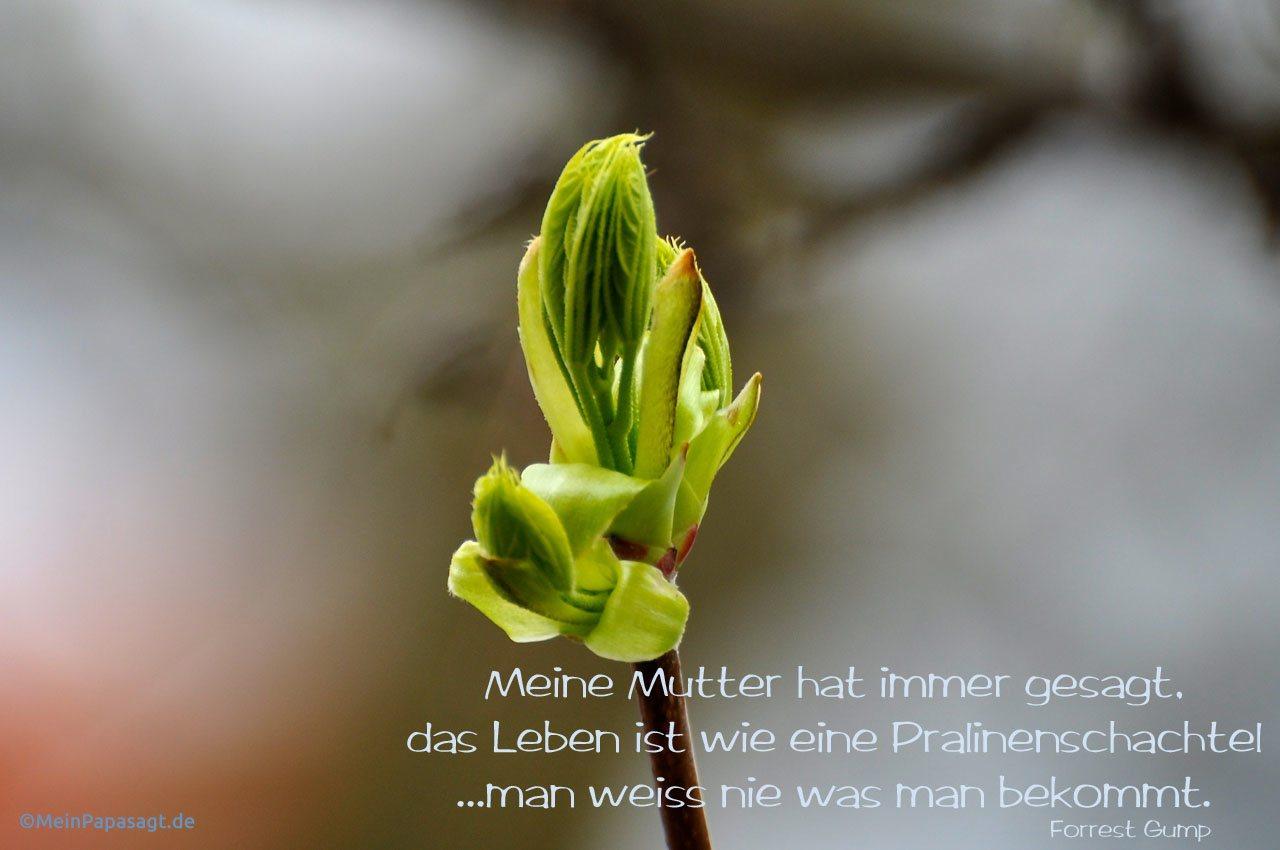 Blütenknospe mit dem Forrest Gump Filmzitat: Meine Mutter hat immer gesagt, das Leben ist wie eine Pralinenschachtel ...man weiss nie was man bekommt. Forrest Gump