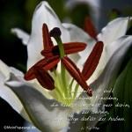 Lilienkelch in Nahaufnahme mit dem Tai Phe Zitat: Die Welt ist voll von kleinen Freuden, die Kunst besteht nur darin, sie zu sehen, ein Auge dafür zu haben. Li Tai Phe