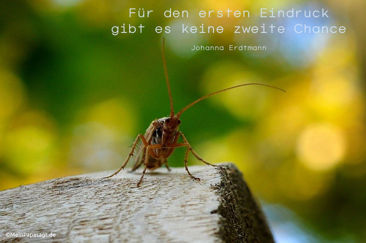 Insekt im Wald mit dem Erdtmann Zitat: Für den ersten Eindruck gibt es keine zweite Chance. Johanna Erdtmann