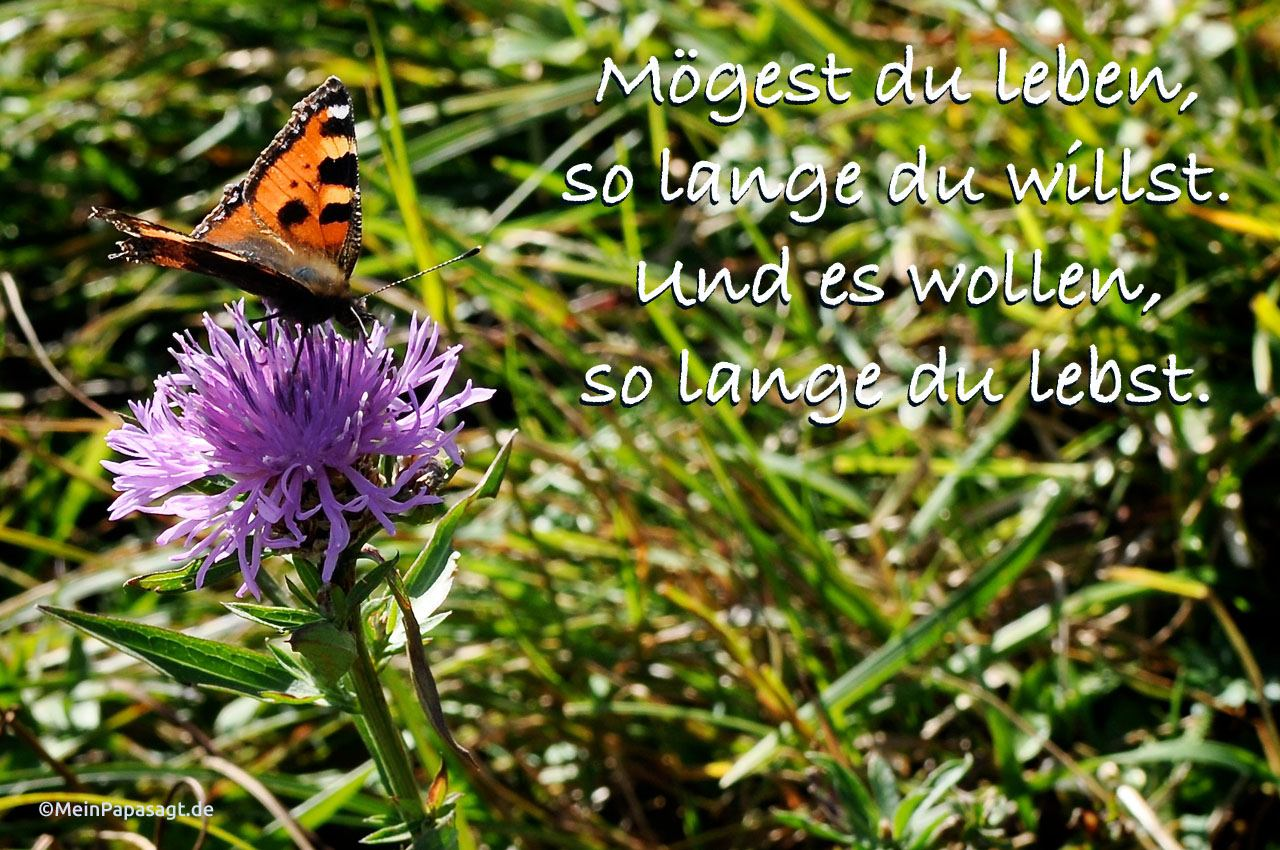 Blume mit Schmetterling auf Wiese mit dem Spruch: Mögest du leben, so lange du willst. Und es wollen, so lange du lebst.