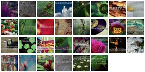 Übersichtsbild. Bilder Galerie mit Weisheiten, Zitaten und Sprüchen Juni 2014