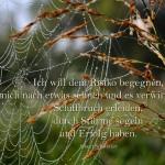 Spinnennetz mit Morgentau an Wildgras mit dem Schweitzer Zitat: Ich will dem Risiko begegnen, mich nach etwas sehnen und es verwirklichen; Schiffbruch erleiden, durch Stürme segeln und Erfolg haben.