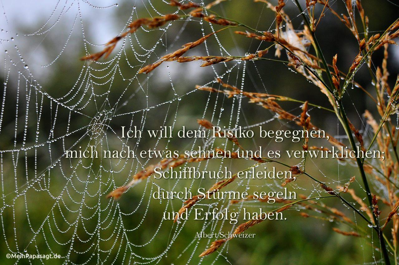 Spinnennetz mit Morgentau an Wildgras mit dem Schweitzer Zitat: Ich will dem Risiko begegnen, mich nach etwas sehnen und es verwirklichen; Schiffbruch erleiden, durch Stürme segeln und Erfolg haben. Albert Schweitzer