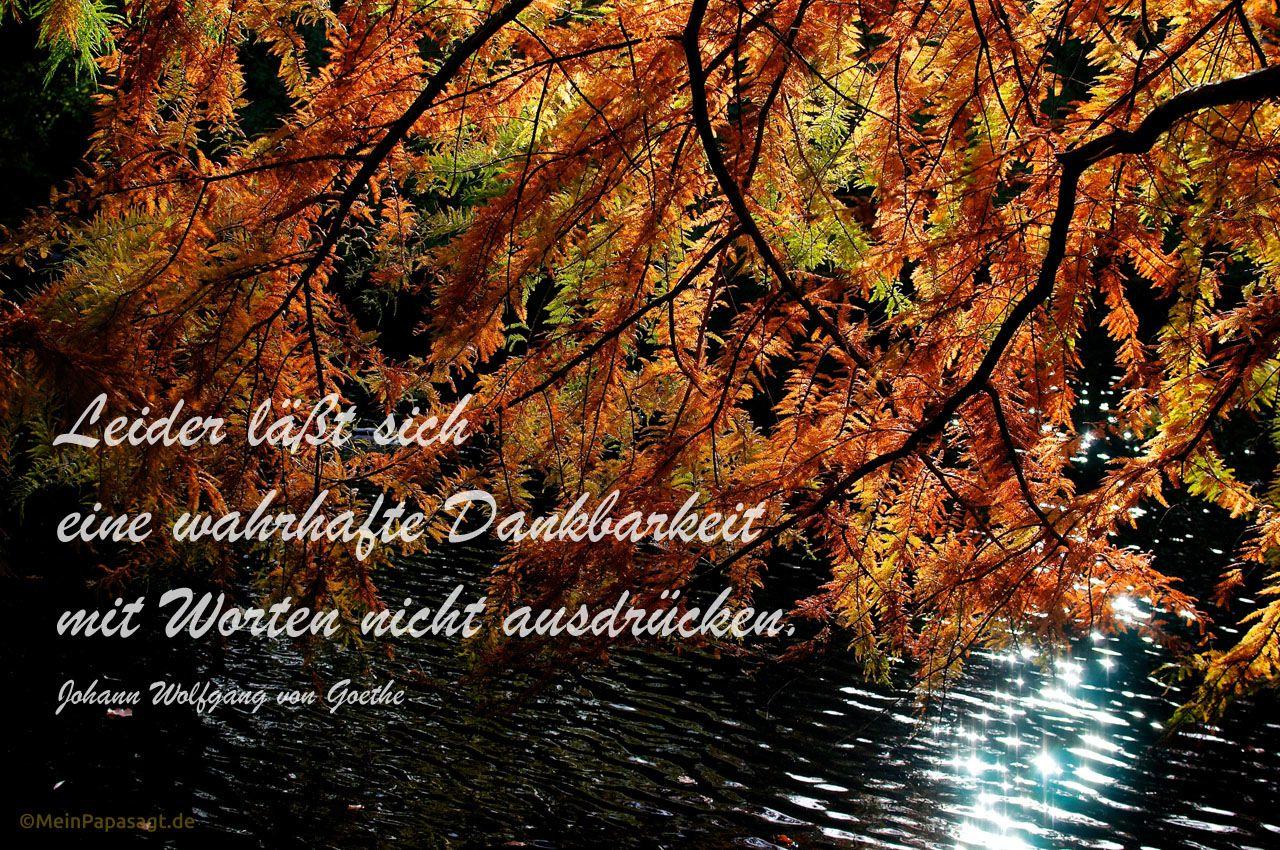 Herbstlich gefärbter Baum neigt sich im Gegenlicht über einen See mit dem Goethe Zitat: Leider läßt sich eine wahrhafte Dankbarkeit mit Worten nicht ausdrücken. Johann Wolfgang von Goethe