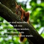 Eichhörnchen im Baum mit dem Allen Zitat: Meine Reflexe sind miserabel. Einmal bin ich von einem Auto überfahren worden, das einen Platten hatte und von zwei Typen geschoben wurde. Woody Allen