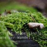 Moos und Pilze auf altem Baumstamm mit dem Heraklit Zitat: Nichts ist so beständig wie der Wandel. Heraklit