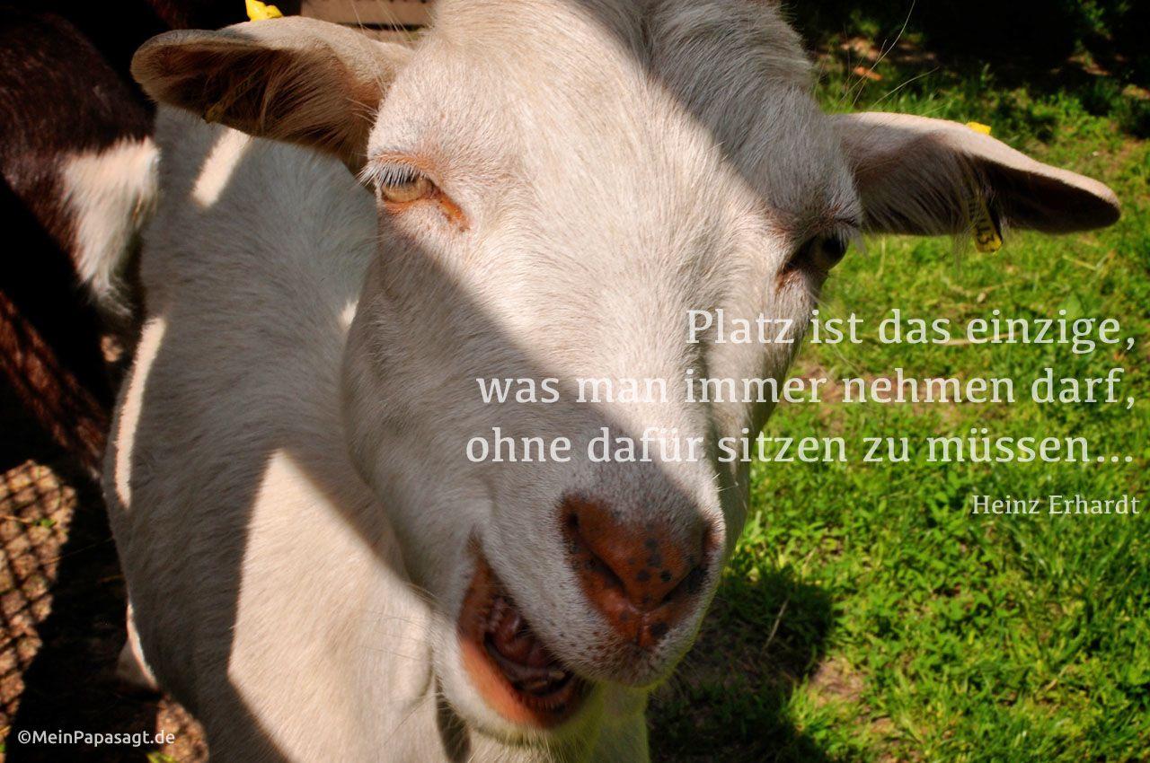Freundschaft Zitat Image collections Die besten zitate Ideen