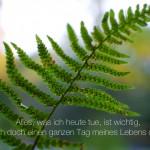 Blätter eines Farns im Berliner Tiergarten mit dem Spruch: Alles, was ich heute tue, ist wichtig, gebe ich doch einen ganzen Tag meines Lebens dafür her.