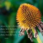 Blütenkelch mit dem Buddha Zitat: Willst du wissen, wer du warst,so schau, wer du bist.Willst du wissen, wer du sein wirst,so schau, was du tust. Buddha