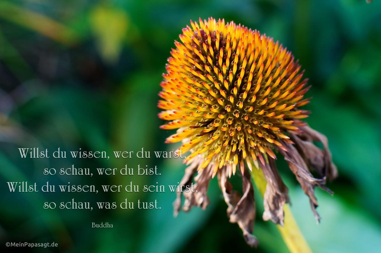 Blütenkelch mit dem Buddha Zitat: Willst du wissen, wer du warst, so schau, wer du bist. Willst du wissen, wer du sein wirst, so schau, was du tust. Buddha