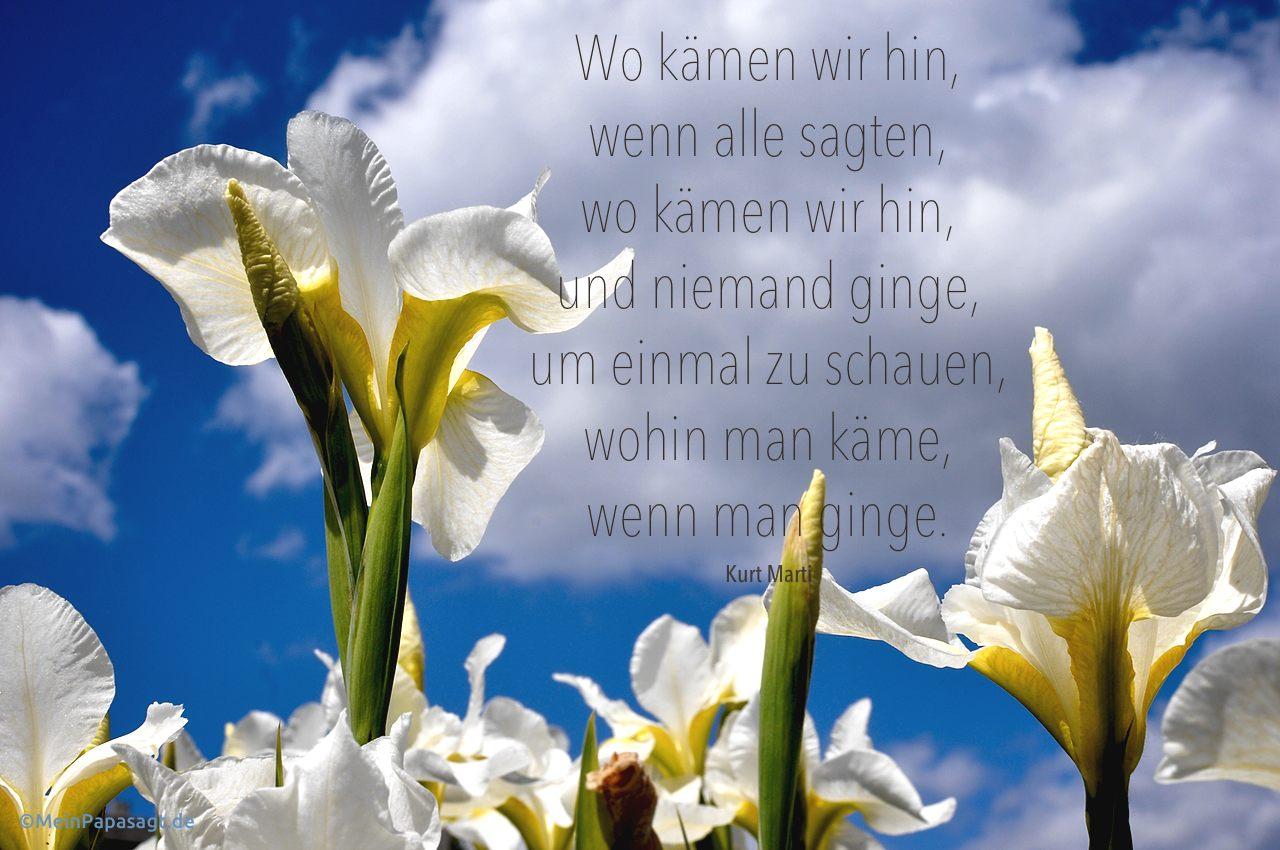 Blumen vor Himmel mit dem Marti Zitat: Wo kämen wir hin, wenn jeder sagte, wo kämen wir hin und keiner ginge, um zu sehen, wohin wir kämen, wenn wir gingen. Kurt Marti
