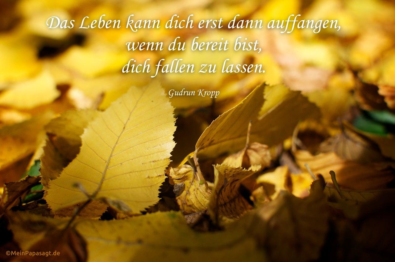 Herbstliches Laub mit dem Kropp Zitat: Das Leben kann dich erst dann auffangen, wenn du bereit bist, dich fallen zu lassen. Gudrun Kropp