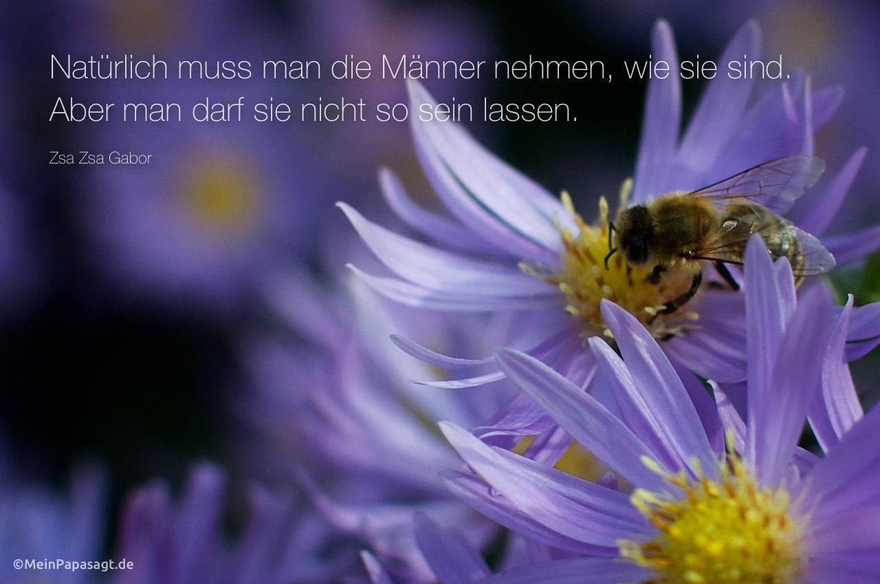 Biene mit dem Zsa Zsa Gabor Zitat: Natürlich muss man die Männer nehmen, wie sie sind. Aber man darf sie nicht so sein lassen. Zsa Zsa Gabor