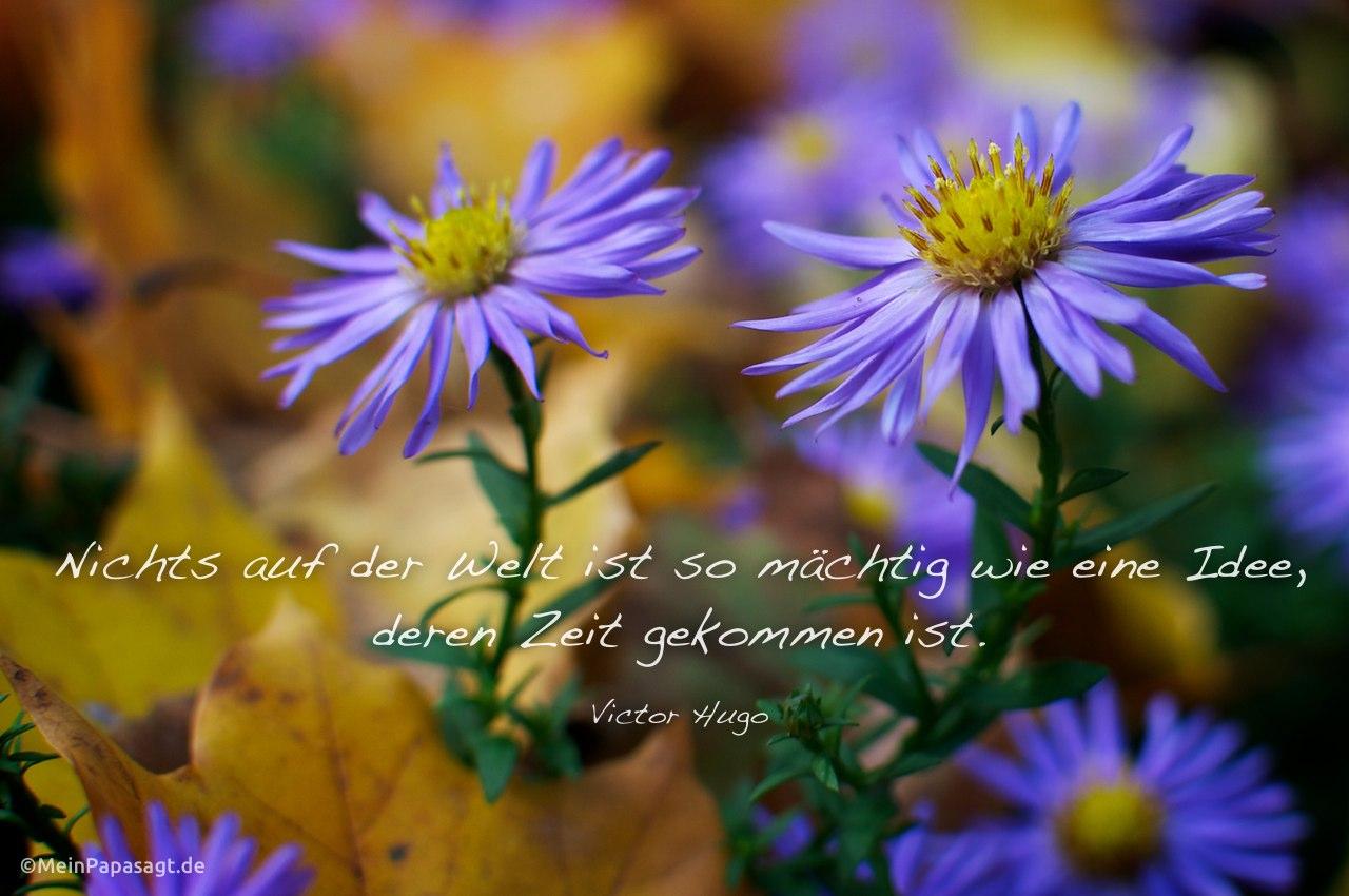 Blumen im Herbstlaub mit Mein Papa sagt Victor Hugo Zitate Bilder: Nichts auf der Welt ist so mächtig wie eine Idee, deren Zeit gekommen ist. Victor Hugo