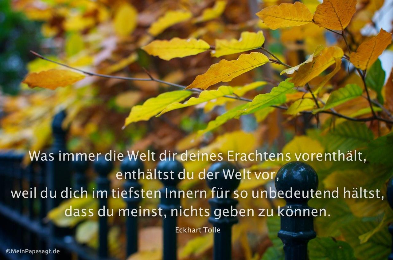 Herbstliches Laub mit Alt-Berliner Gartenzaun mit dem Tolle Zitat: Was immer die Welt dir deines Erachtens vorenthält, enthältst du der Welt vor, weil du dich im tiefsten Innern für so unbedeutend hältst, dass du meinst, nichts geben zu können. Eckhart Tolle