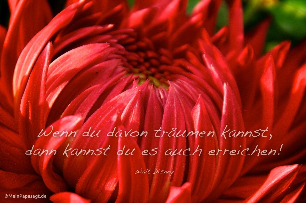 Blütenkelch mit dem Disney Zitat: Wenn du davon träumen kannst, dann kannst du es auch erreichen! Walt Disney