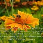 Biene auf einer Blume mit dem Spruch: Wie wäre es wohl, dem neuen Tag zu begegnen, als hätte es davor nie einen Tag gegeben? Ich würde die Wirklichkeit als Wirklichkeit erleben. Würde Dinge sehen, die ich nicht benennen könnte, und ich würde staunen.