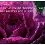 Rosa Pflanze mit dem Rousseau Zitat: Es ist mehr wert, jederzeit die Achtung der Menschen zu haben, als gelegentlich ihre Bewunderung. Jean-Jacques Rousseau