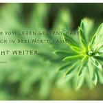 Pflanze, leicht farbverfälscht mit dem Robert Lee Frost Zitat: Was ich vom Leben gelernt habe, kann ich in drei Worte fassen: es geht weiter. Robert Lee Frost
