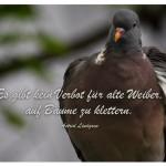 Taube auf einem Ast. Es gibt kein Verbot für alte Weiber, auf Bäume zu klettern. Astrid Lindgren
