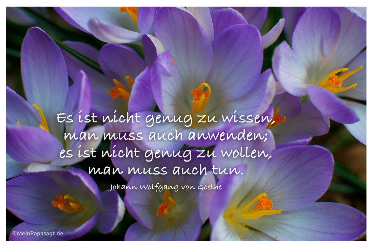 Blütenkelche  mit dem Goethe-Zitat: Es ist nicht genug zu wissen, man muss auch anwenden; es ist nicht genug zu wollen, man muss auch tun. Johann Wolfgang von Goethe