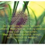 Gräser mit dem Zitat: Der gebildete Mensch versucht, den unteren Menschen in sich zu verdrängen, ohne sich klarzumachen, dass er diesen dadurch zwingt, aufrührerisch zu werden. Carl-Gustav Jung