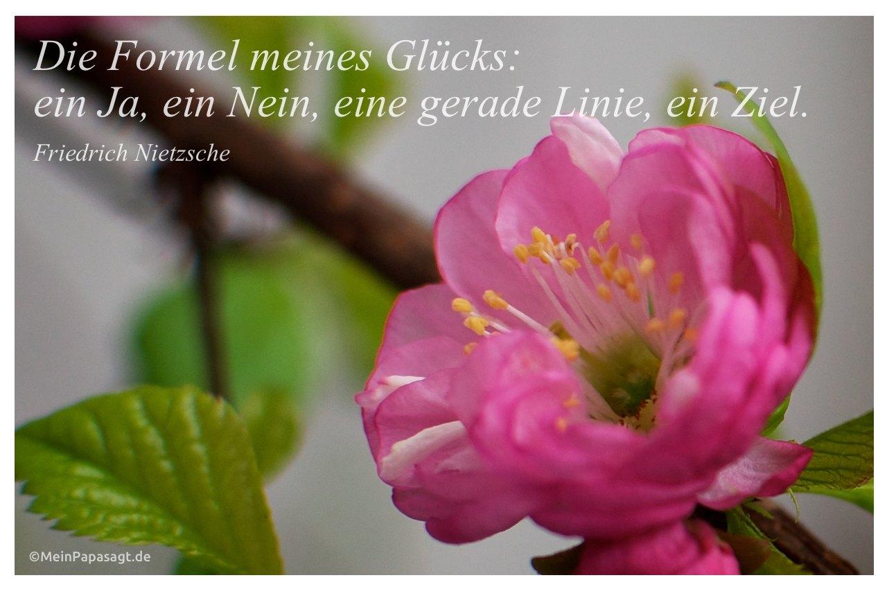 Mandelblüte mit dem Friedrich Nietzsche Zitat: Die Formel meines Glücks: ein Ja, ein Nein, eine gerade Linie, ein Ziel. Friedrich Nietzsche