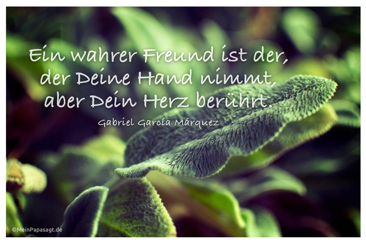Pflanze mit dem Zitat: Ein wahrer Freund ist der, der Deine Hand nimmt, aber Dein Herz berührt. Gabriel García Márquez