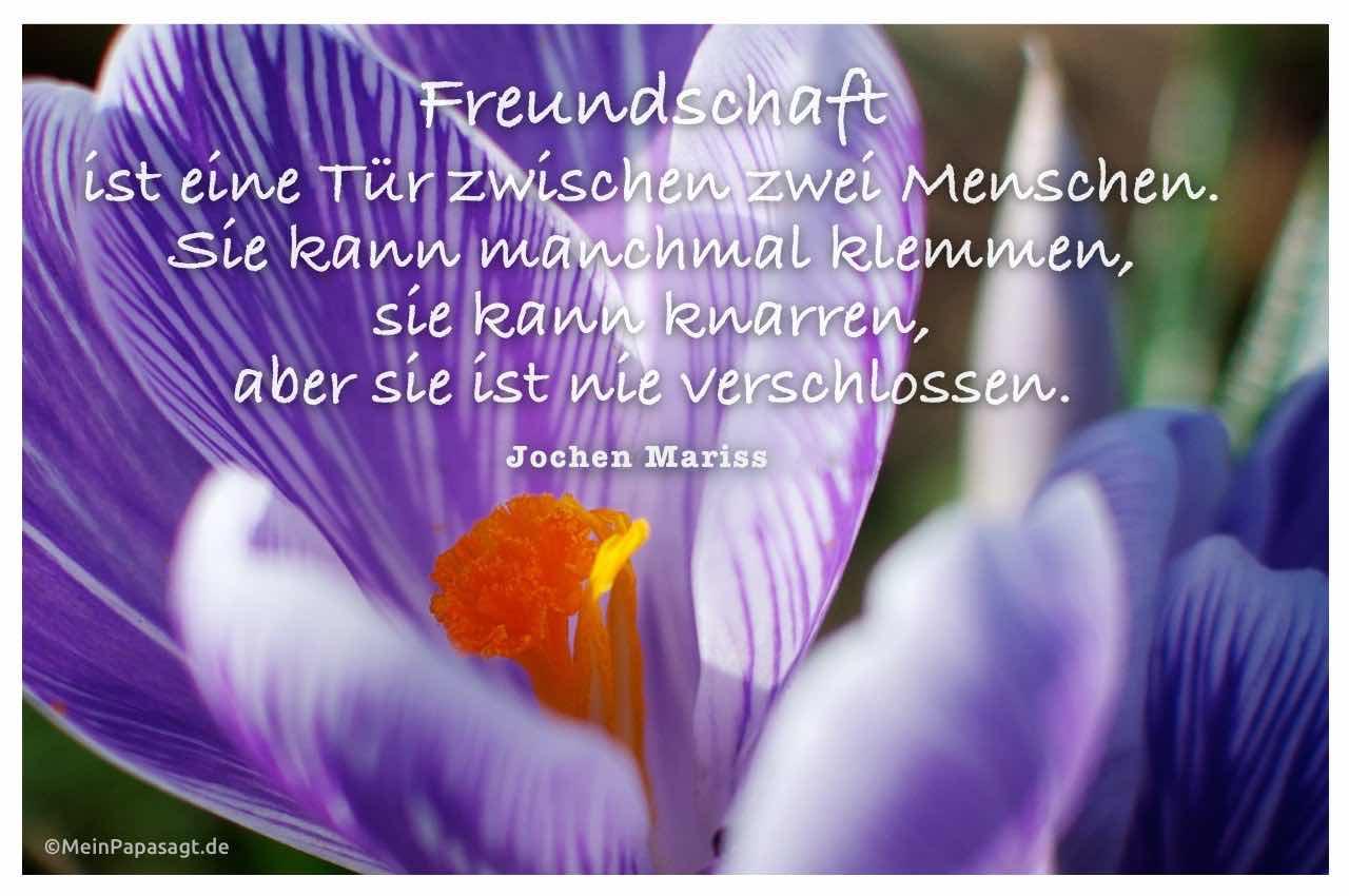 Krokusse mit dem Mariss Zitat: Freundschaft ist eine Tür zwischen zwei Menschen. Sie kann manchmal klemmen, sie kann knarren, aber sie ist nie verschlossen. Jochen Mariss