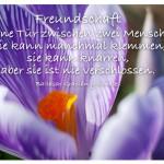 Blume mit dem Zitat: Freundschaft ist eine Tür zwischen zwei Menschen. Sie kann manchmal klemmen, sie kann knarren, aber sie ist nie verschlossen. Baltasar Gracián y Morales