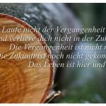 Birkenholz mit dem Zitat: Laufe nicht der Vergangenheit nach und verliere dich nicht in der Zukunft. Die Vergangenheit ist nicht mehr. Die Zukunft ist noch nicht gekommen. Das Leben ist hier und jetzt. Buddha