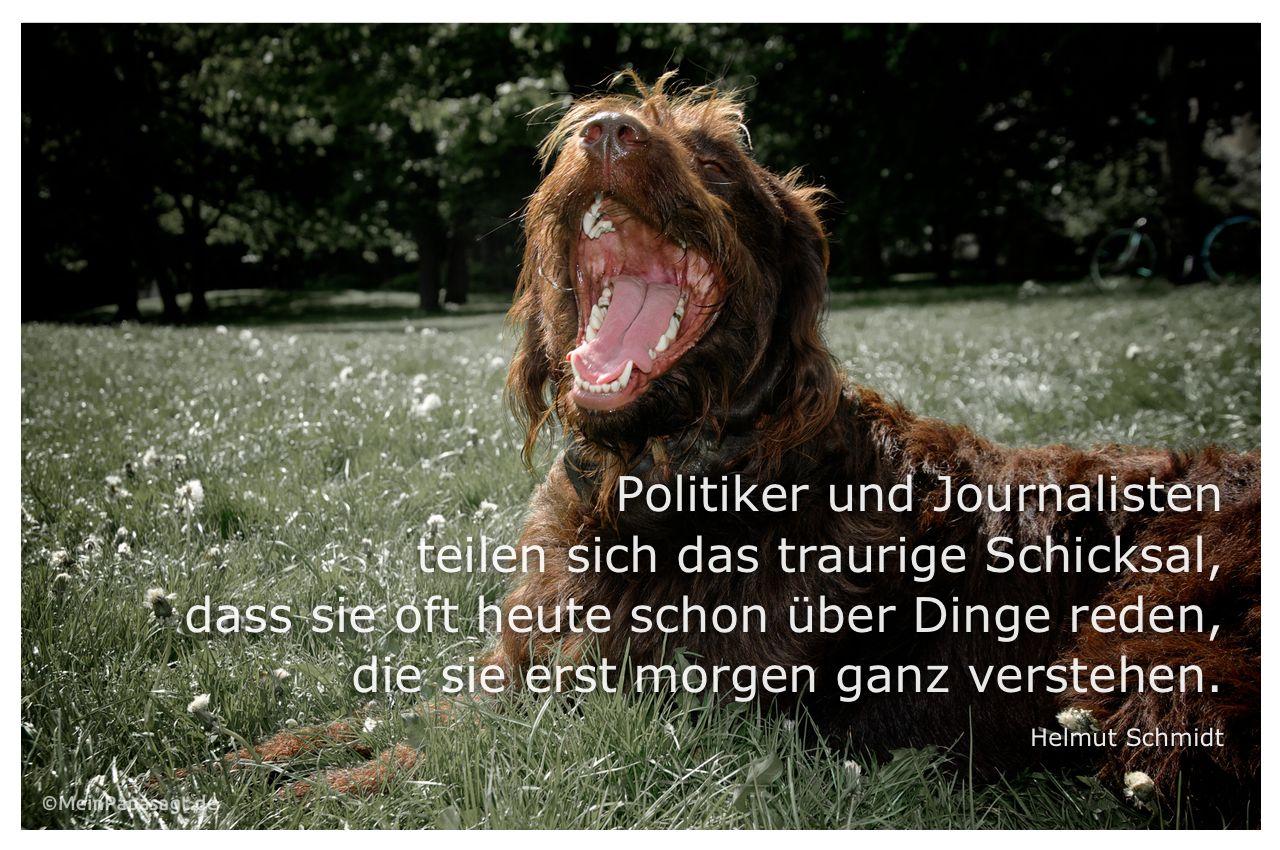 Labradoodle mit Zitat: Politiker und Journalisten teilen sich das traurige Schicksal, dass sie oft heute schon über Dinge reden, die sie erst morgen ganz verstehen. Helmut Schmidt