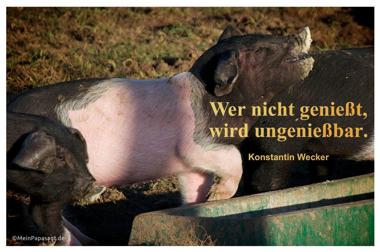 Schweine mit dem Zitat: Wer nicht genießt, wird ungenießbar. Konstantin Wecker