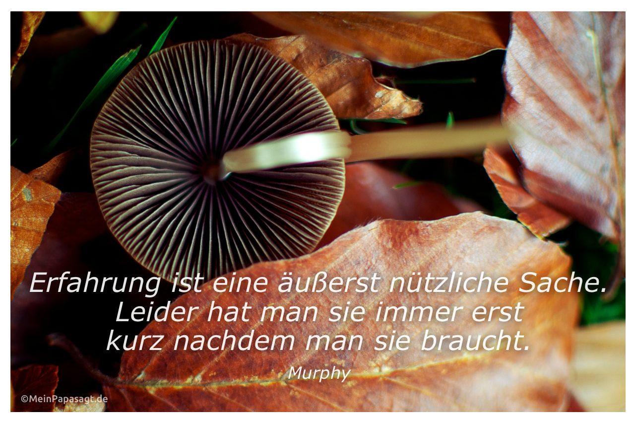Pilz im Herbstlaub mit dem Zitat: Erfahrung ist eine äußerst nützliche Sache. Leider hat man sie immer erst kurz nachdem man sie braucht. Murphy