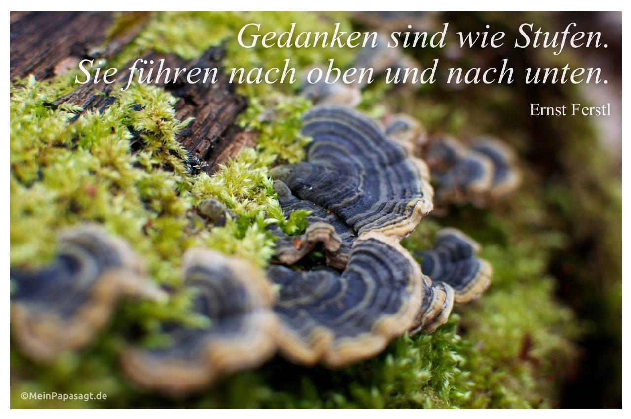 Pilze an einem Baum mit dem Zitat: Gedanken sind wie Stufen. Sie führen nach oben und nach unten. Ernst Ferstl