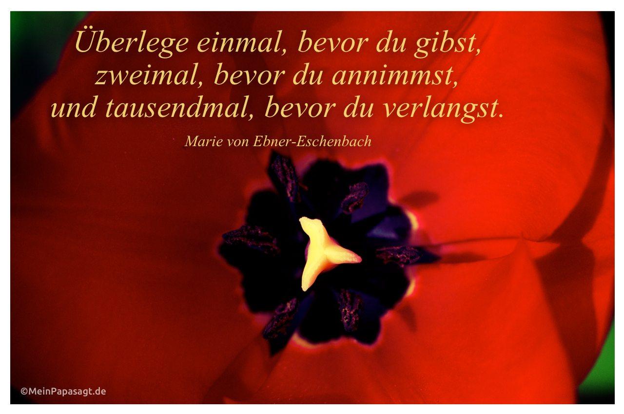 Tulpe mit dem Zitat: Überlege einmal, bevor du gibst, zweimal, bevor du annimmst, und tausendmal, bevor du verlangst. Marie von Ebner-Eschenbach