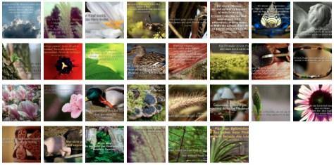 Übersichtsbild. Bilder Galerie mit Weisheiten, Zitaten und Sprüchen April 2014