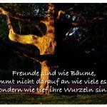 Platane mit dem Zitat: Freunde sind wie Bäume, es kommt nicht darauf an wie viele es sind, sondern wie tief ihre Wurzeln sind.