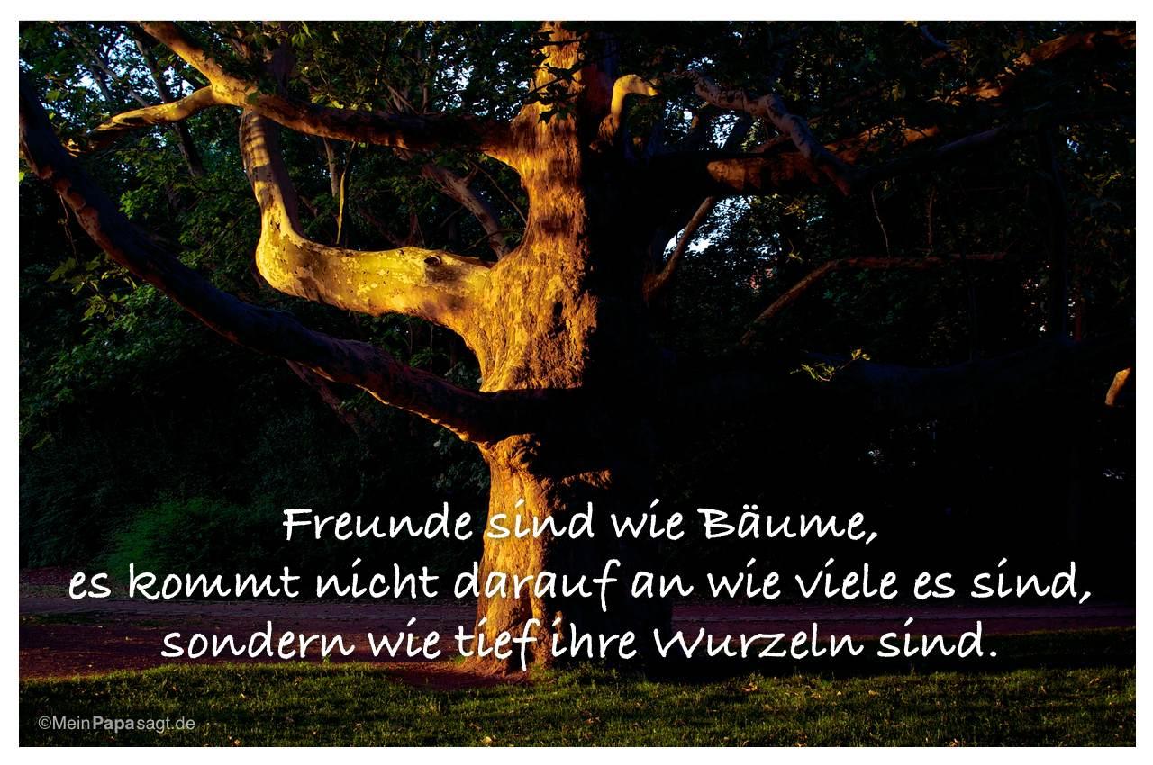 Sprueche Baum | lebe dein leben sprüche