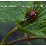 Marienkäfer mit dem Zitat: Leben ist immer lebensgefährlich. Erich Kästner