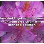 Blume mit dem Zitat: Menschen sind Engel mit nur einem Flügel - nur wenn sie sich umarmen können sie fliegen.