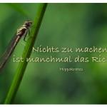 Libelle mit dem Zitat: Nichts zu machen, ist manchmal das Richtige. Hippokrates