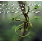 Ranke-Pflanze: Schatten die auf unser Leben fallen, sind nur Zeichen dafür, dass irgendwo die Sonne scheint!