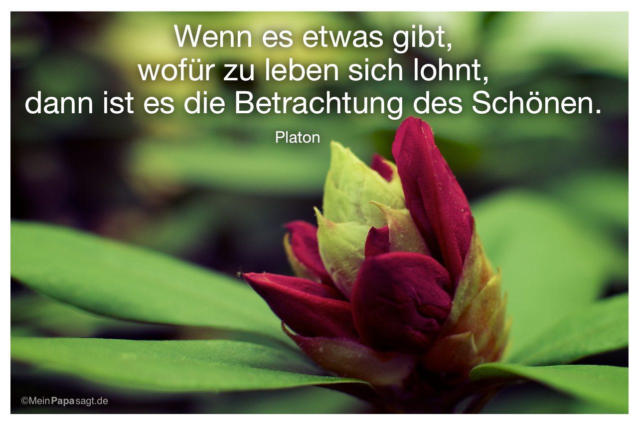 Oleander Knospe mit dem Platon Zitat: Wenn es etwas gibt, wofür zu leben sich lohnt, dann ist es die Betrachtung des Schönen. Platon