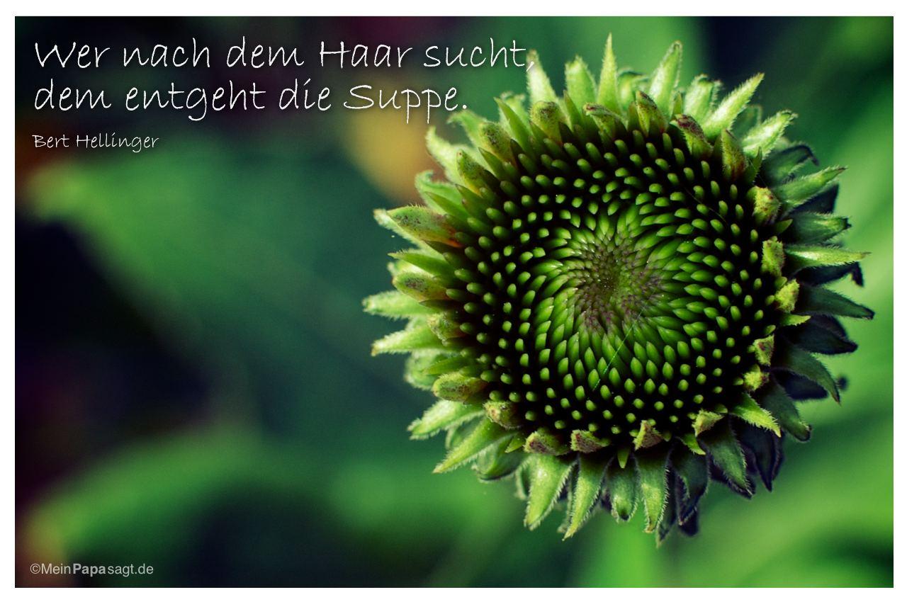 Blüte mit dem Zitat: Wer nach dem Haar sucht, dem entgeht die Suppe. Bert Hellinger