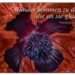 Mohnblume mit dem Sprichwort: Wunder kommen zu denen, die an sie glauben. Französisches Sprichwort