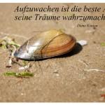 Muschel am Strand mit dem Zitat: Aufzuwachen ist die beste Art, seine Träume wahrzumachen. Diane Keaton