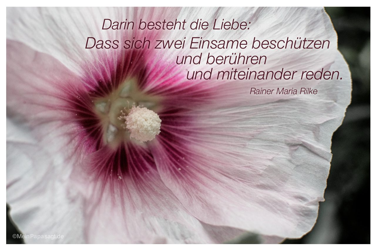Stockrose mit dem Zitat: Darin besteht die Liebe: Dass sich zwei Einsame beschützen und berühren und miteinander reden. Rainer Maria Rilke