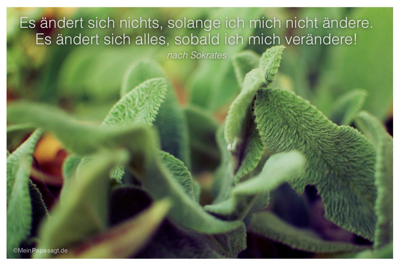 Pflanze mit dem Zitat: Es ändert sich nichts, solange ich mich nicht ändere. Es ändert sich alles, sobald ich mich verändere! nach Sokrates